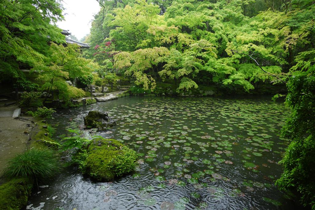 南禅寺天授庵の池泉回遊式庭園