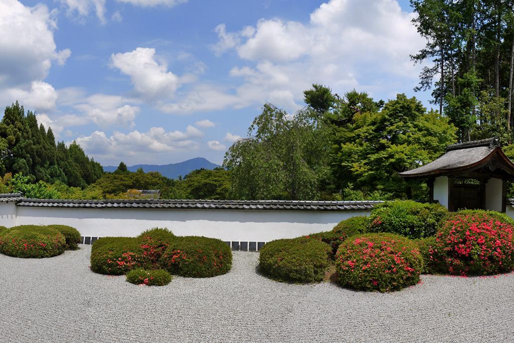 正伝寺庭園のサツキ