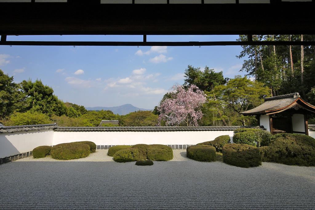 正伝寺庭園の枯山水