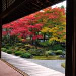 泉涌寺庭園の枯山水