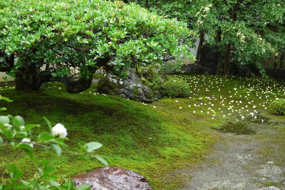 妙心寺東林院庭園の枯山水