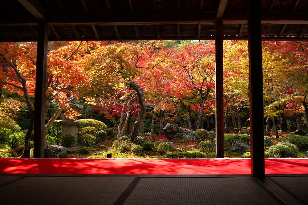 圓光寺庭園の枯山水